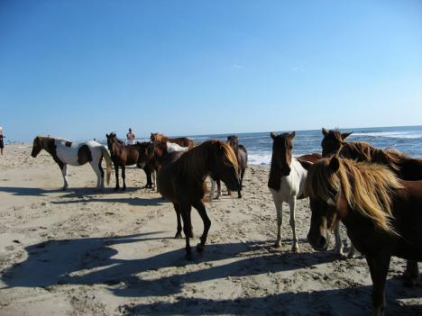 Assateague Island National Seashore is one of 100 parks nationwide that are waiving entry fees for National Parks Week.