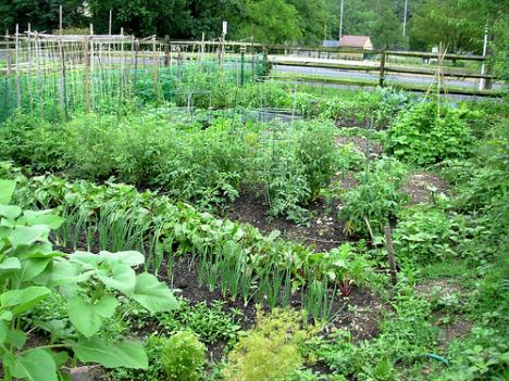 Waiting lists can be long for community gardens in the D.C. area.