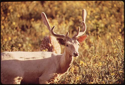 Maryland has become the first state to approve the use of Gonacon, a birth control product for deer.