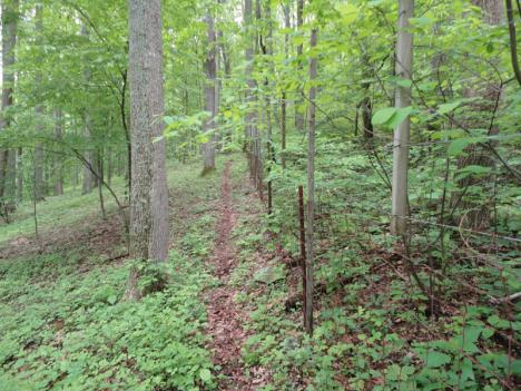 A world with deer (left) versus a world without them (right). The difference is stark and extends from the ground to the canopy -- birds, mice, and chipmunks are more abundent without deer.