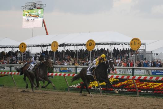 Calvin Borel crosses the finish line, winning the 2009 Preakness Stakes.