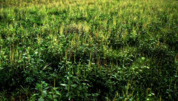 D.C. is tied for 10th place in the list of Metro areas with the biggest ragweed problems, according to a new study. Ragweed is a source of pain for many allergy sufferers.