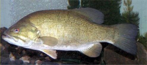Research shows that endocrine disruptors affect aquatic life.