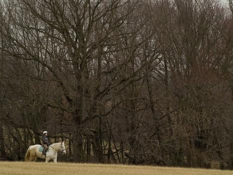 Horseback riders in Maryland are trying to negotiate with the Washington Suburban Sanitary Commission to reopen a trail near the Patuxent River.