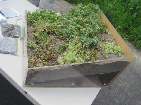 Green roofs help keep buildings cool and absorb storm water.