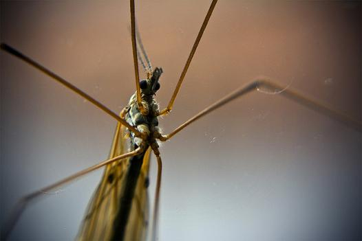 Mosquitoes in Cleveland Park and Woodley Park were found to be carrying the West Nile virus in recent tests.