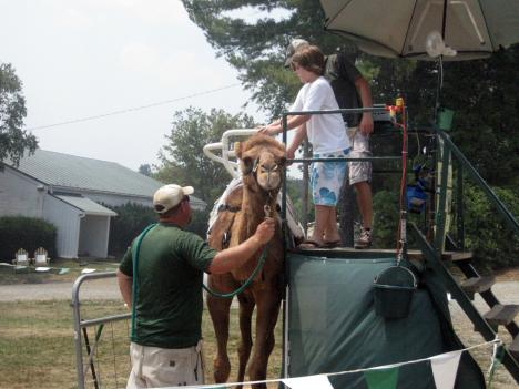 Workers at the Loudoun County Fair worked to keep animals cool this weekend through a heat wave that affected the area throughout most of the fair.
