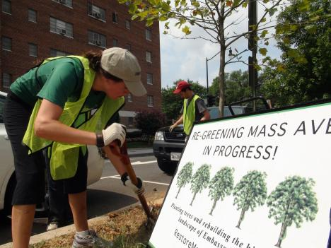 Restore Mass Ave has tended to hundreds of trees in D.C.
