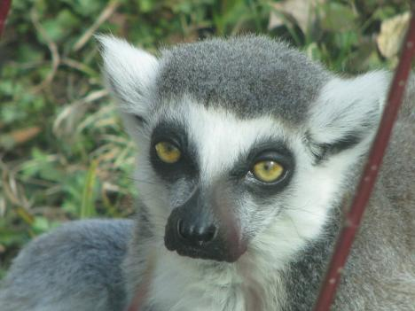 Lemurs at the National Zoo started wailing 15 minutes before the Mineral quake rocked the D.C. region.