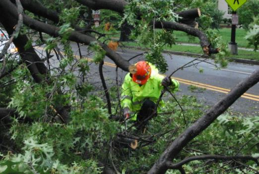 Many trees and power lines are still down in the D.C. metro area, which forced some schools to close due to lack of electricity.