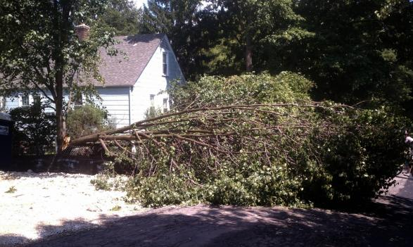 Filing an insurance claim for storm damage can be a tricky process; the District's Department of Insurance, Securities and Banking is there to help