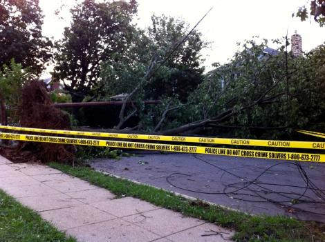 A downed tree and loose power lines on Yuma Street NW in the District are just some casualties of this weekend's hurricane.
