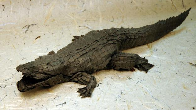 "You've got nothing to fear from this origami ""American Alligator,"" except, perhaps, a paper-cut."