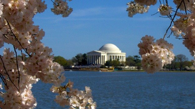 D.C.'s famed cherry blossom trees will be in peak bloom between April 8-12.