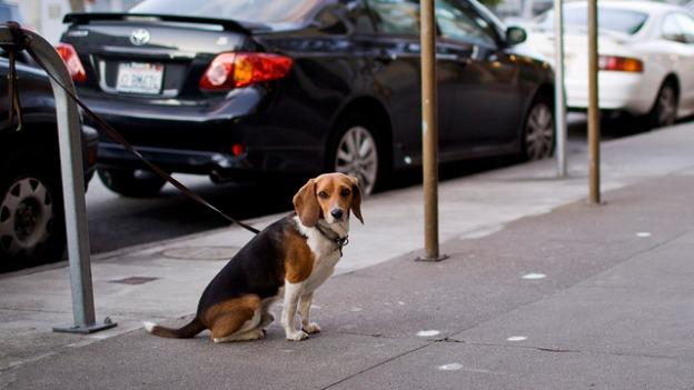 Under new rules in Arlington County, dogs can only be tethered for three hours at a time.