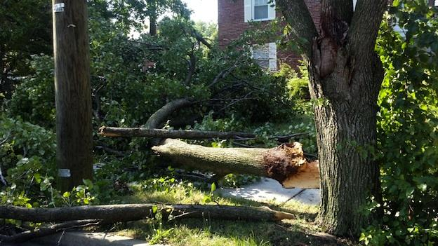 A fallen tree at neighborhood in Arlington, Va. after Friday night's severe thunderstorm.
