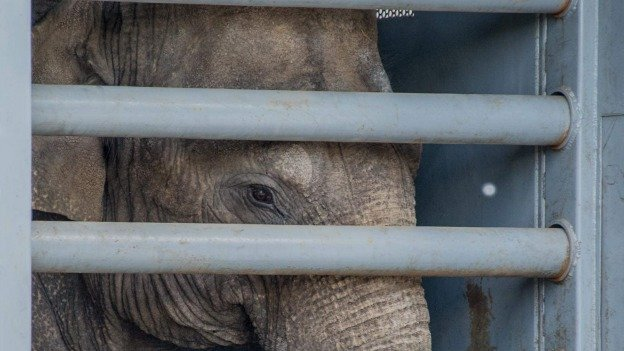 The National Zoo is adding three new Asian elephants to its herd, and they will make their public debut this week.