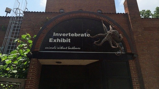 The National Zoo's Invertebrate Exhibit closed after 27 years.