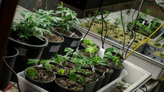 Under a ballot intiative D.C. residents will vote on in November, possession of up to two ounces of marijuana would become legal.