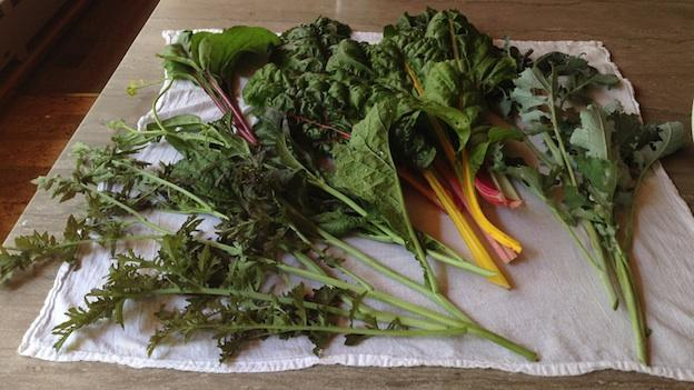 Mustard, kale, and chard are a few of the more common edible wild greens.