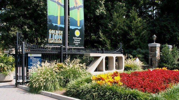 The National Zoo is a popular D.C. destination, but its director says it's suffering from budget cuts.
