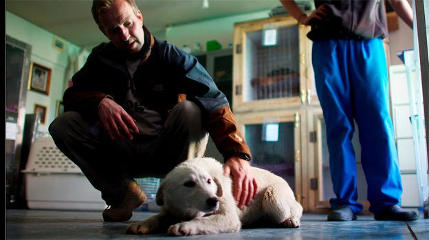 """Pen Farthing, founder of Nowzad Dogs in Kabul, pets a dog named Barfi, or """"Snowy,"""" who was rescued from an Afghan army base. After rescuing a number of dogs during his tour, Farthing came back to Afghanistan to establish a shelter and clinic that's been able to transport about 700 cats and dogs out of the country."""