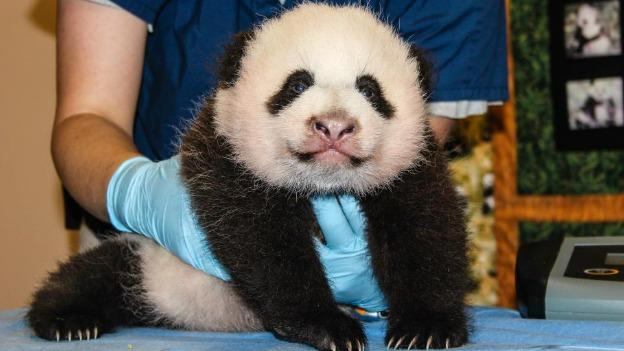 The female panda cub needs a name, and it's up to you to help decide what it will be.