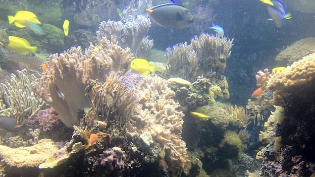 Marine animals are critical to the health of our oceans, and a rise of just one degree celsius will kill many corals.