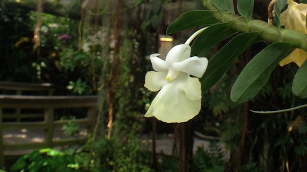 An orchid sits in the shade of a fig tree.