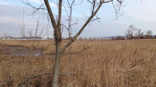 Woodrow Wilson Bridge is visible beyond tiny Dyke Marsh in Virginia.