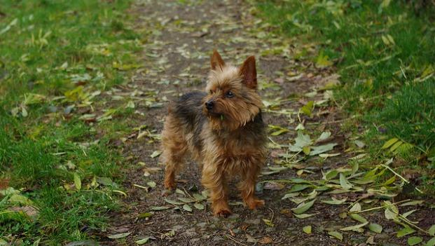Young stole a Yorkshire Terrier because he believed he could sell it for a lot of money.