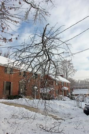 Power lines were down across the region after the recent snowstorm. Pepco did not reach its goal of restoring all power by Sunday.