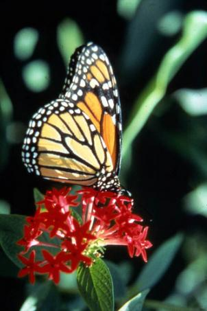 Butterfly counts are a good way to gauge the health of an environment and help land managers plan for the future.