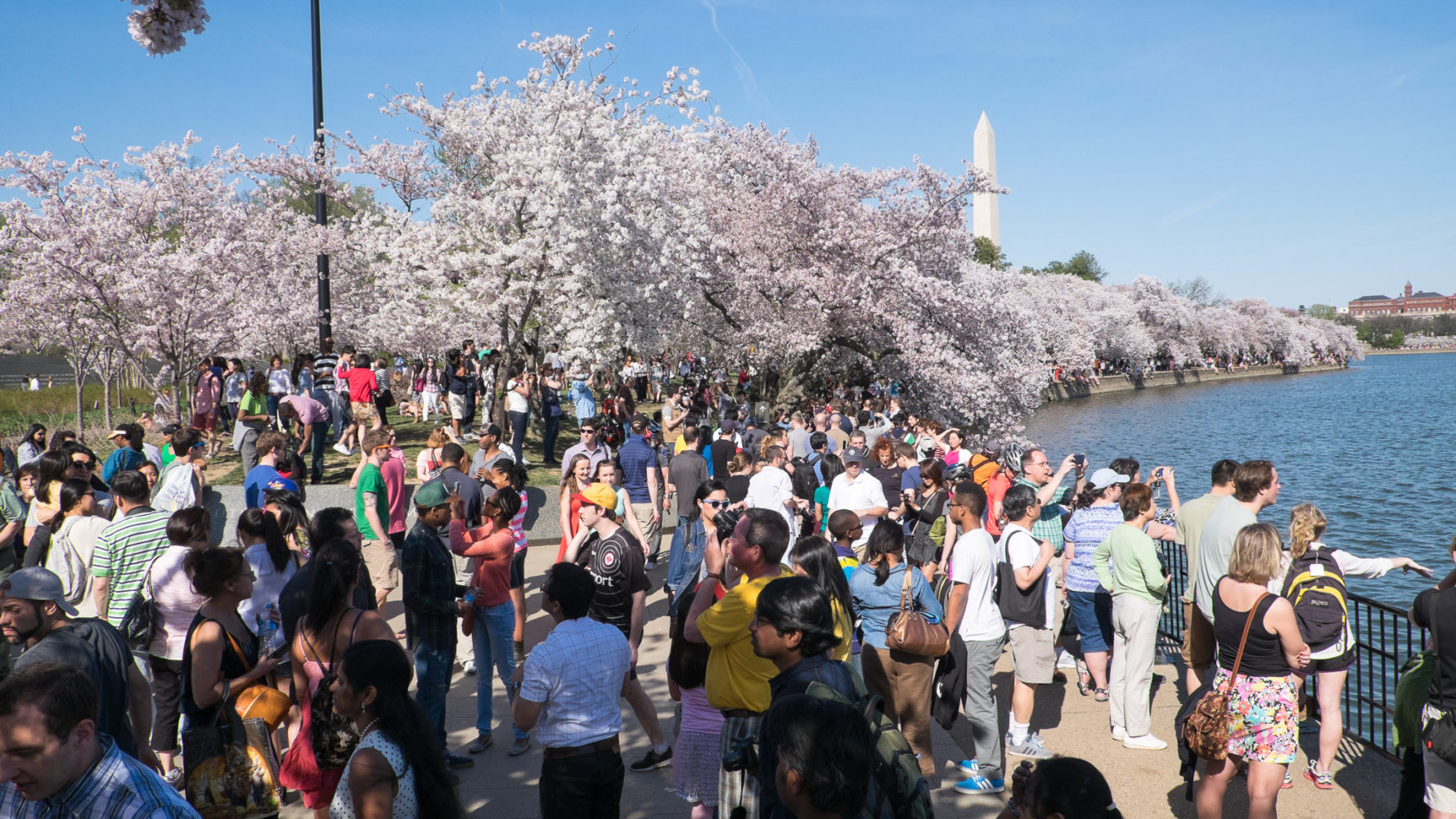 Blossoms Off The Beaten Path A Guide To The Flowering Trees Of Dc