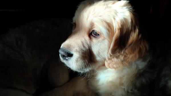 Maryland Law Bans Retail Sale Of Puppies | WAMU