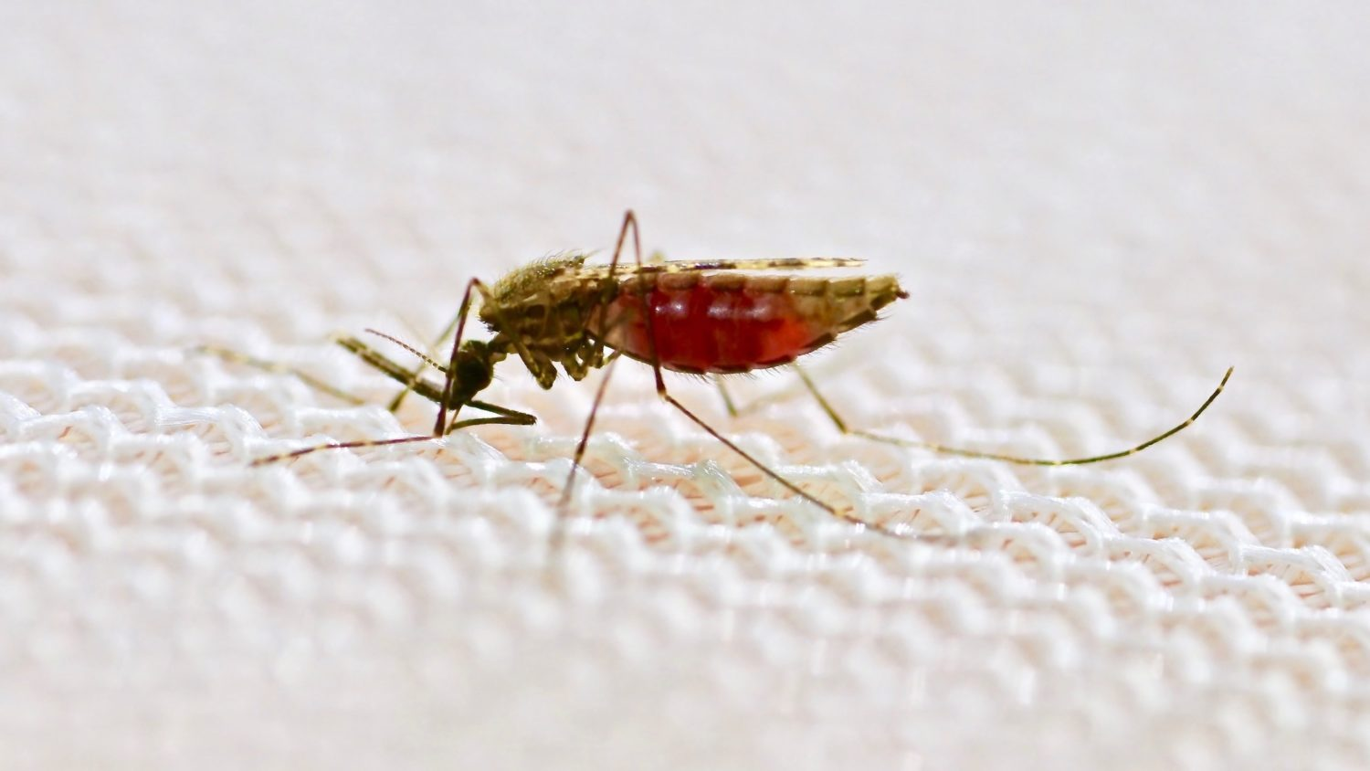 Promising New Bed Net Strategy To Zap Malaria Parasite In