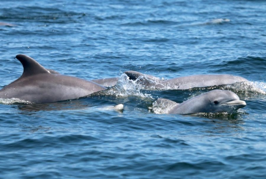 Two Dolphins Who Live In The Potomac River Need Names  You Can Help